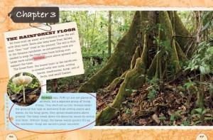 rainforest_3